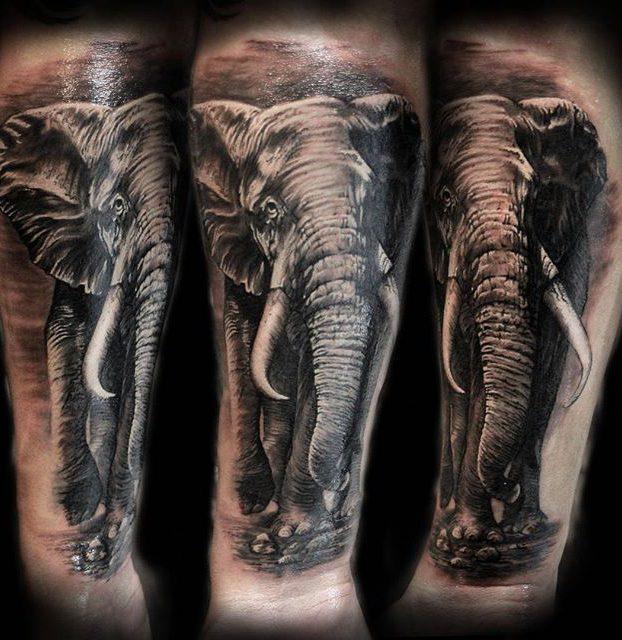 elefante no braço realismo preto e branco