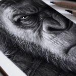 Desenhando Cesar – Planeta Dos Macacos (Carvão)